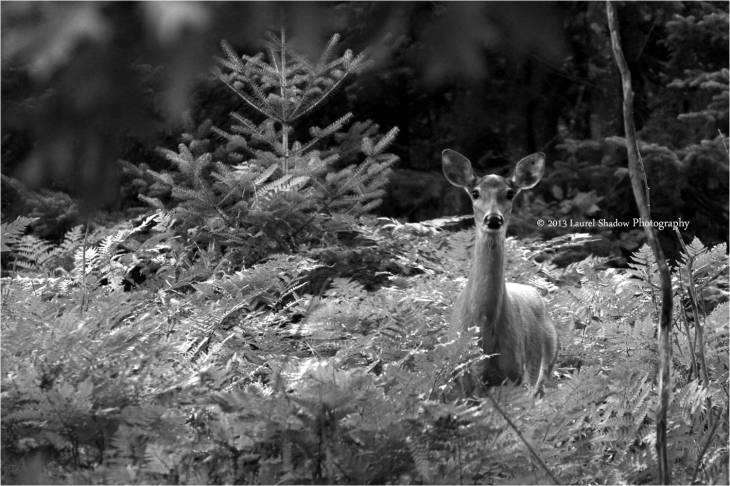 Deer blw LSP