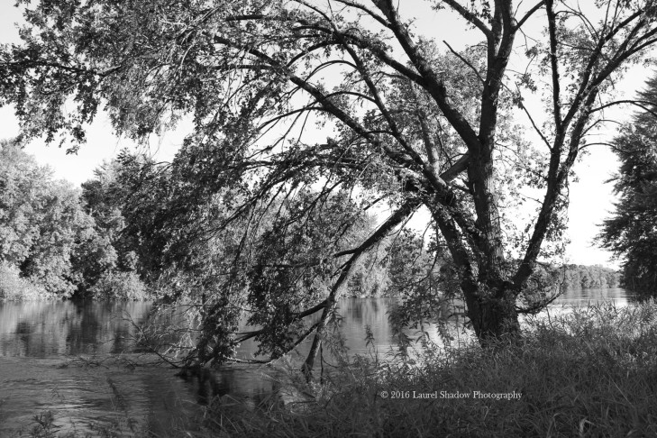 tree-in-the-river